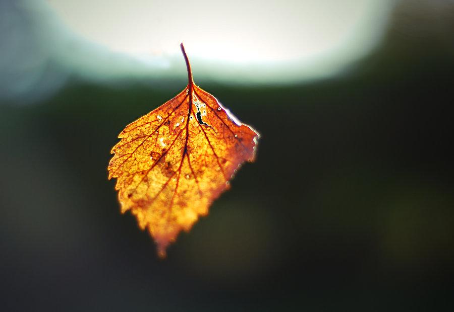 falling_leaf_by_eiran04